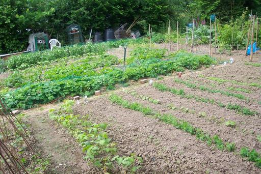 A photograph of Punnetts Town Allotments