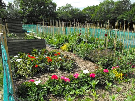 A photograph of Theobalds Green Allotments