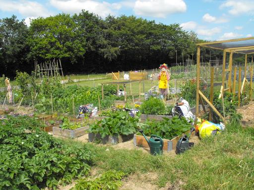 Theobalds Green allotments